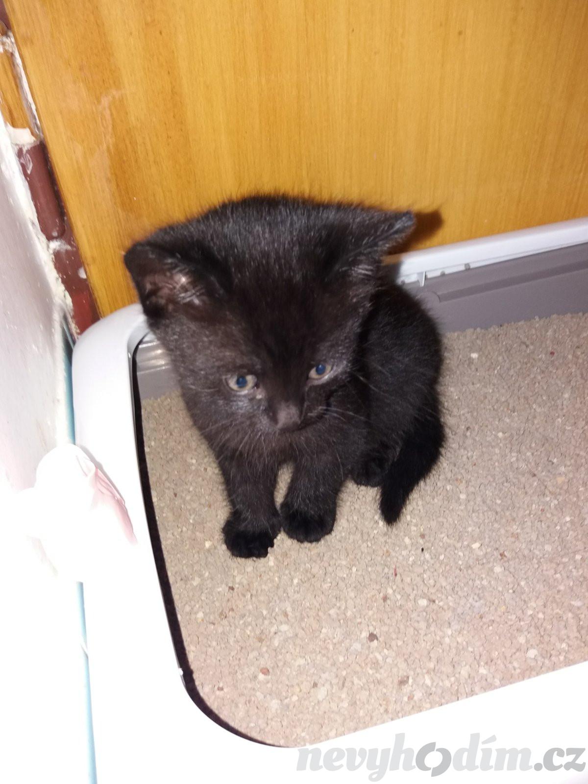 Černá kočička krása